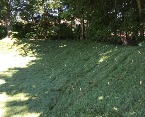 Pose de pelouse cultivée (tourbe)
