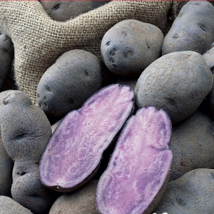 Patate Violet Queen 2