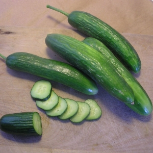 Concombre Libanais Super Zagross