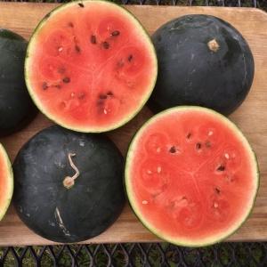 Melon d'Eau Blacktail Mountain